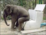 BAB toilette-elephant